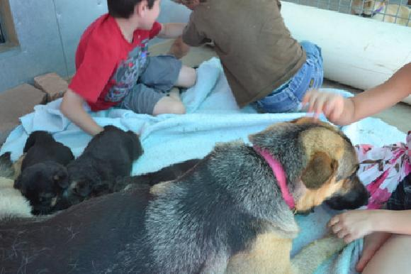Fully Trained Therapy Dogs For Sale Already Trained