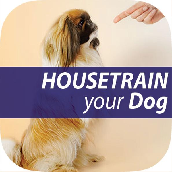 house train dog in 7 days