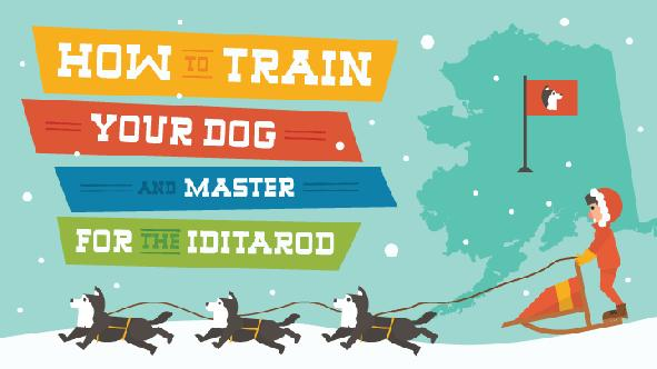 how do mushers train their dogs for the iditarod