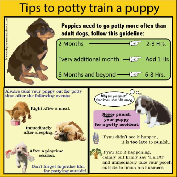 how to train guide dogs
