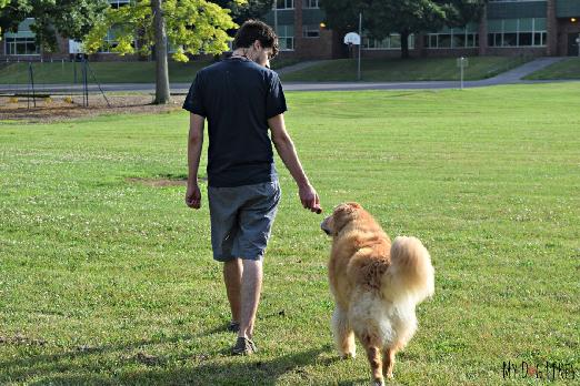 how to train my dog to walk with me