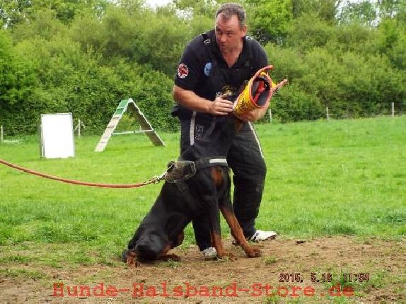 How Much Does Mccann Dog Training Cost - Mccann Dog Training