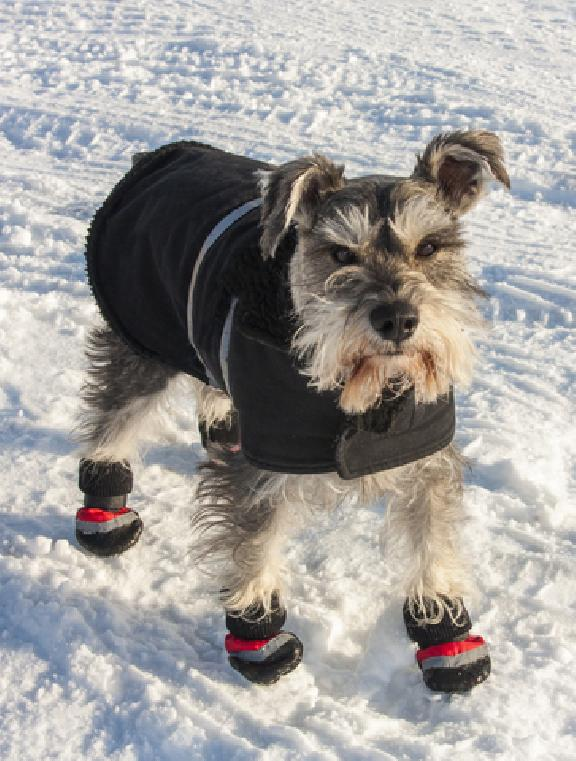 potty training puppy in winter