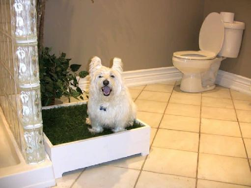 toilet training puppies outside