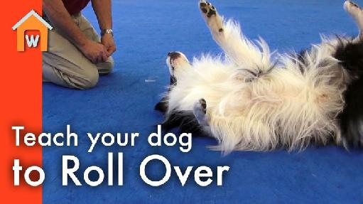 train a dog to roll over